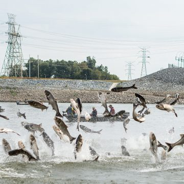 Asian Carp Advisory Commission Holds First Meeting