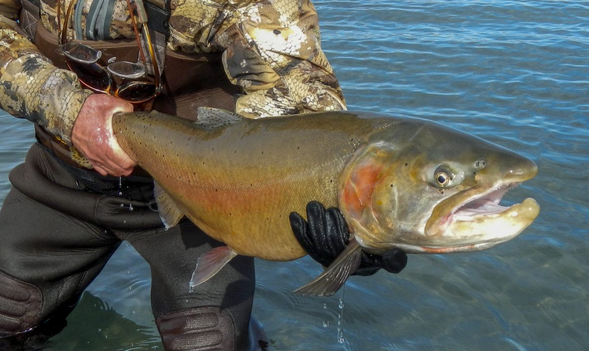 Iconic trout can again access historic spawning grounds
