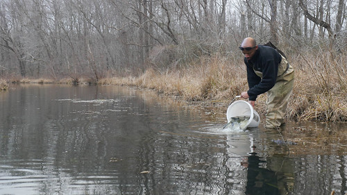 Maryland to Stock 300,000 Trout this Winter