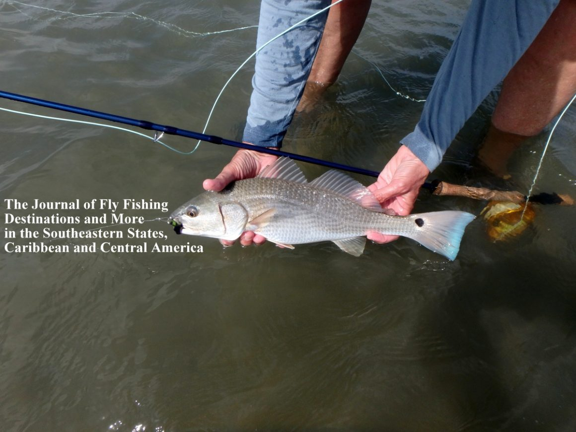 """""""On the Fly South"""" Now Available Online"""