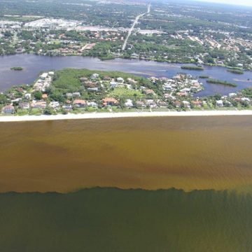 Red Tide Returns to Florida's Lee, Collier Counties