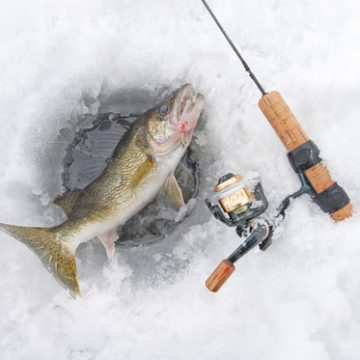Wisconsin Walleye Management Plan For Oneida, Price And Vilas Counties Virtual Meeting Jan. 12