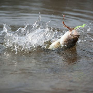 Missouri D.C. Fishing Clinic March 6 in Blue Springs