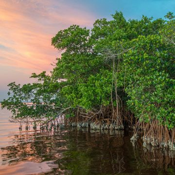 Costa Rica Promotes Mangrove Protections