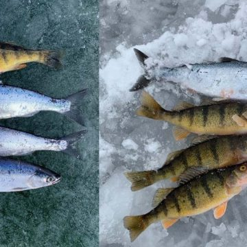 Mixed Bag on Ice–Idaho's Ririe Reservoir