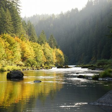 Legislation to Conserve Oregon Salmon/Steelhead/Trout Waters