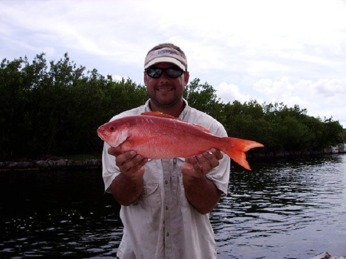 """New Species Added to """"Catch a Florida Memory"""" Program"""
