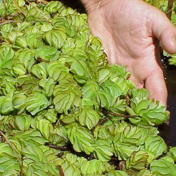 Texas PWD War on Invasives Continues