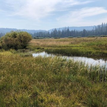 California Conservation Board Funds Stream Enhancements
