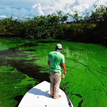 Algae Dump to South Florida's Coasts Likely This Summer