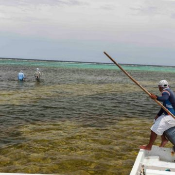 BTT to Conduct Economic Impact Assessment of Mexico's Flats Fishery
