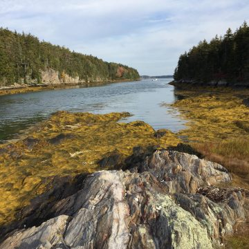 Projects to Enhance Recreational Fishing and Restore Habitat