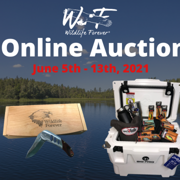 Wildlife Forever Online Auction Supports Conservation