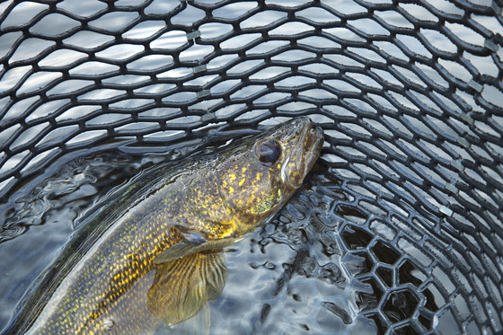 Lake Erie NWT Preview: Big Fish and Lots of Them