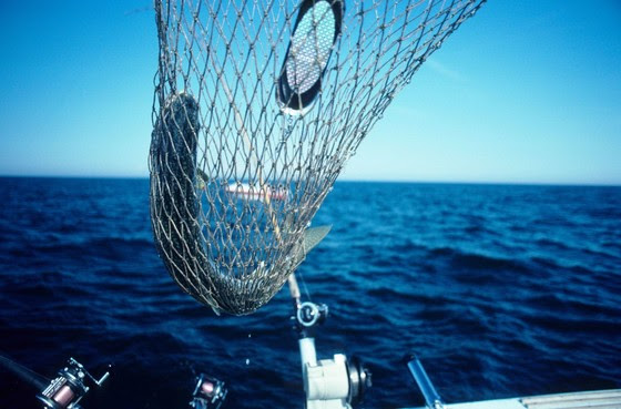 Update To Lake Trout Harvest Regulations For Lake Michigan