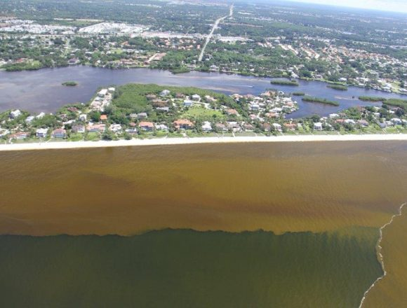 Red Tide Continues on Florida's Gulf Coast