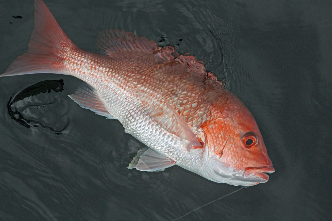 Texas Red Snapper Season Federal Waters to Close Aug. 5