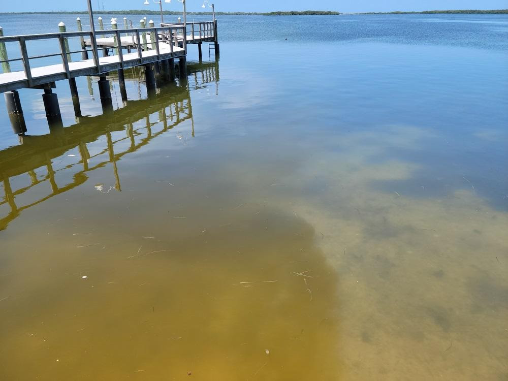 Tampa Bay Scallop Search Cancelled Due to Red Tide