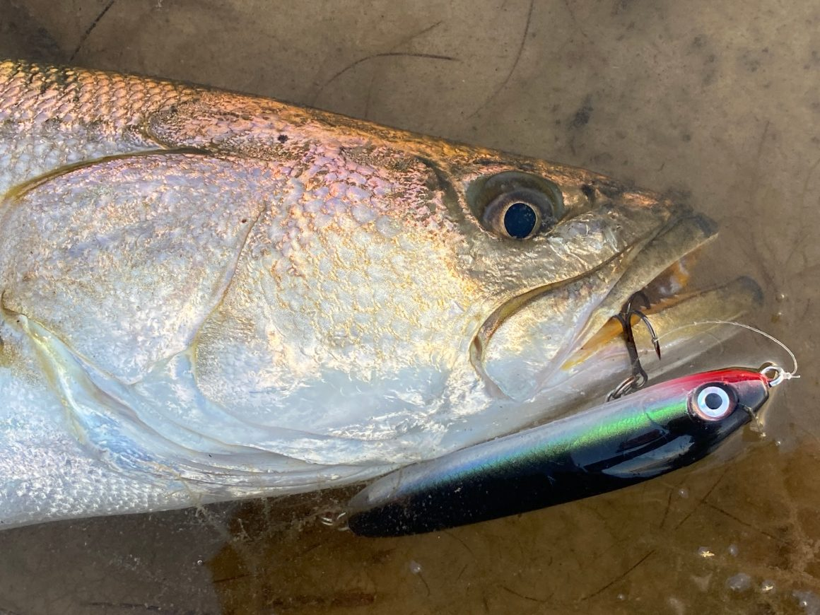 Laguna Madre Seatrout Emergency Regs Extended