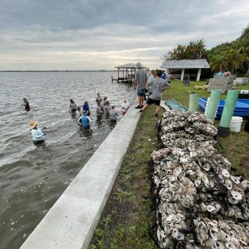 Oyster Reef Restoration in Florida's Indian River Lagoon