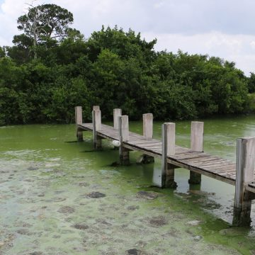 BT&T Calls for Major Investment in Florida Water Quality