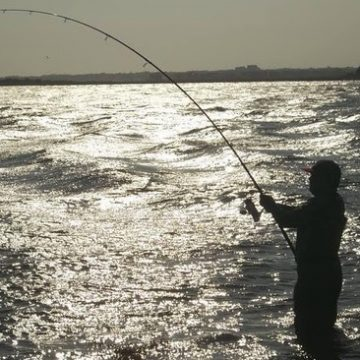 Study Reports on Recreational Fisheries Management Strategies