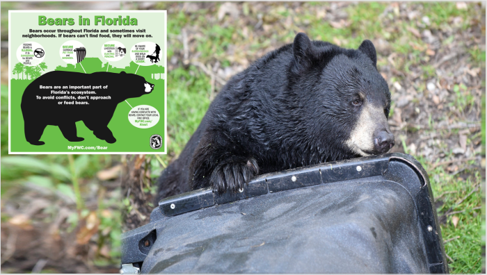 Florida Reminds Residents, Outdoorsmen to be Bear Aware
