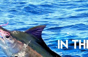 Update from The Billfish Foundation