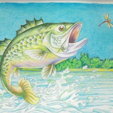 Wildlife Forever Fish Art Contest Opens