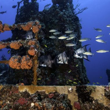 REEF Act a Boost for Offshore Anglers