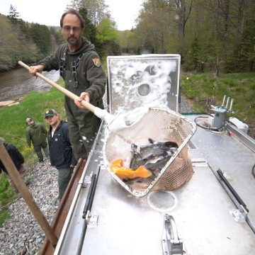 West Virginia Fall Trout Stocking Underway