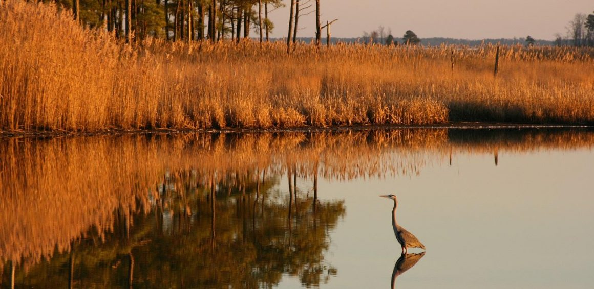 $10 Million in Grants to Restore the Chesapeake Bay Watershed